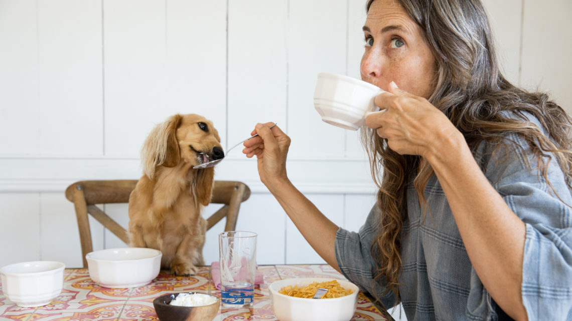 Woman feeding her dog breakfast from the table like a baby